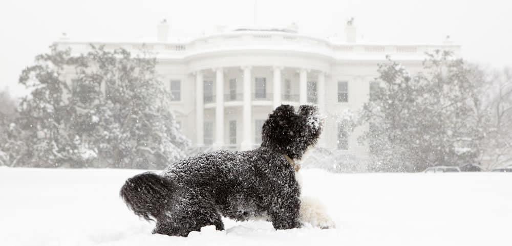 dog at white house - Washington DC snow - Ice Melt Supplier needed